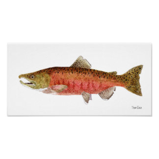 Chinook Salmon in Spawning Dress Poster