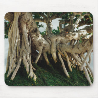 Chinsese Banyan Ficus Bonsai Roots Mouse Pad