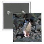 Chinstrap Penguin 2 Inch Square Button