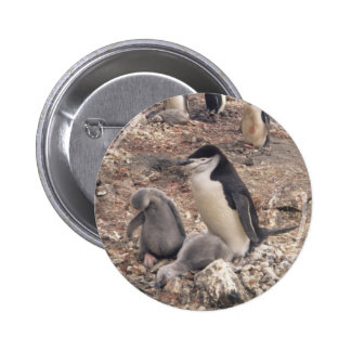 Chinstrap Penguin and Chicks Pins