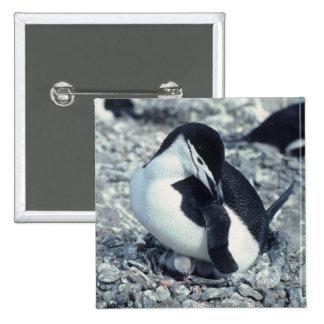 Chinstrap Penguin Pinback Button