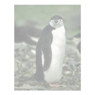 Chinstrap Penguin Letterhead