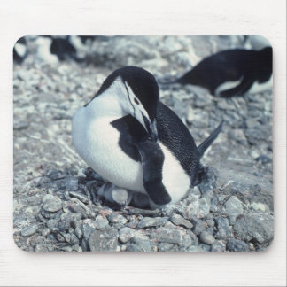 Chinstrap Penguin Mouse Pad