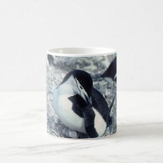Chinstrap Penguin Coffee Mugs