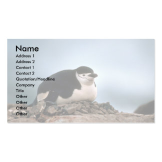 Chinstrap Penguin On Nest Double-Sided Standard Business Cards (Pack Of 100)