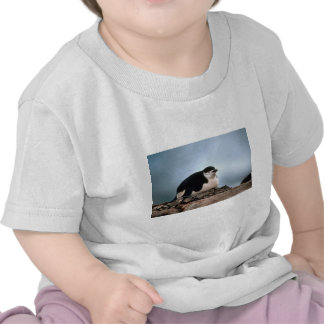 Chinstrap Penguin On Nest Shirts