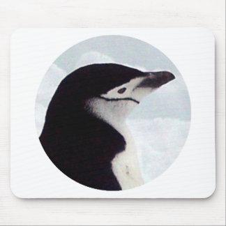 Chinstrap Penguin Portrait Mouse Pad