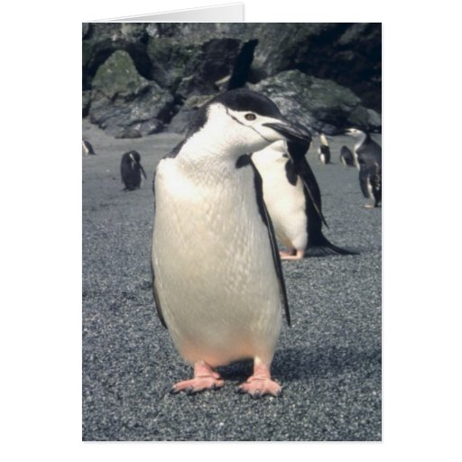 Chinstrap Penguin Waddle Greeting Card