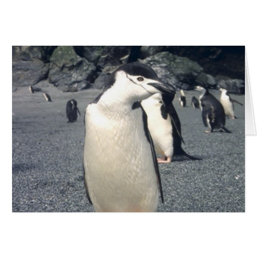 Chinstrap Penguin Waddle Card