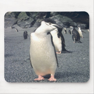 Chinstrap Penguin Waddle Mouse Pad
