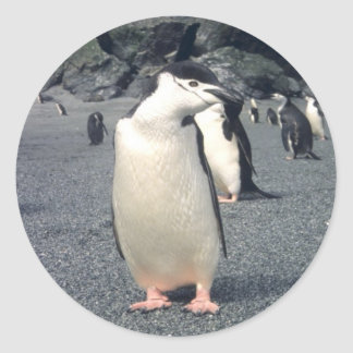 Chinstrap Penguin Waddle Classic Round Sticker