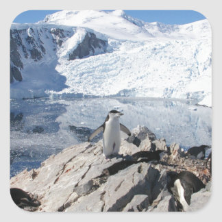 Chinstrap Penguins in Antarctica Square Sticker