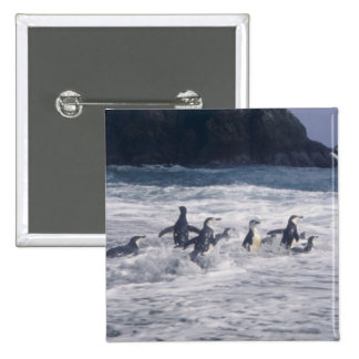 Chinstrap Penguins in the beach surf Pin