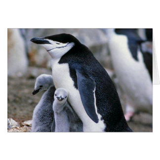 Chinstrap Penguins Mum and Babies Cards