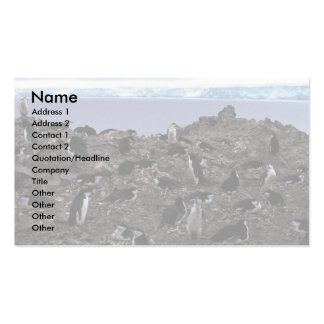 Chinstrap Penguins Nesting Colony Double-Sided Standard Business Cards (Pack Of 100)