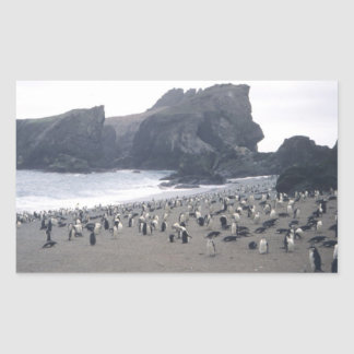 Chinstrap Penguins on Seal Island