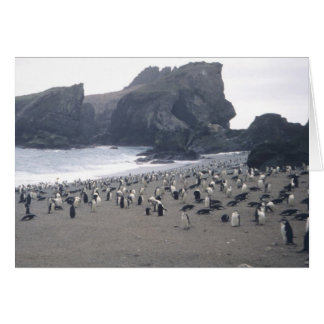 Chinstrap Penguins on Seal Island Card