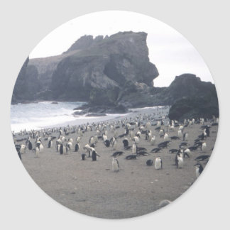 Chinstrap Penguins on Seal Island Classic Round Sticker