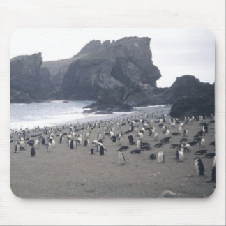 Chinstrap Penguins on Seal Island Mouse Pad