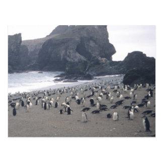 Chinstrap Penguins on Seal Island Postcard