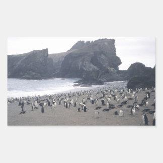 Chinstrap Penguins on Seal Island Rectangular Sticker