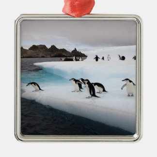 chinstrap penguins, Pygoscelis antarctica, 2 Metal Ornament