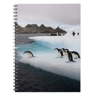 chinstrap penguins, Pygoscelis antarctica, 2 Notebook