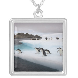 chinstrap penguins, Pygoscelis antarctica, 2 Silver Plated Necklace