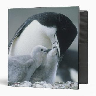 Chinstrap Penguins, Pygoscelis antarctica), 3 Ring Binder
