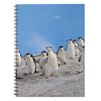 chinstrap penguins, Pygoscelis antarctica, Notebook