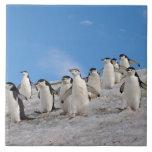 chinstrap penguins, Pygoscelis antarctica, Ceramic Tile