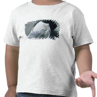 Chinstrap Penguins, Pygoscelis antarctica), Tshirt
