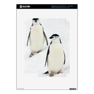 Chinstrap Penguins Pygoscelis antarcticus), iPad 3 Skin