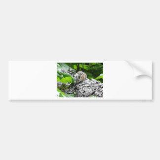 chipmunk,1 bumper sticker
