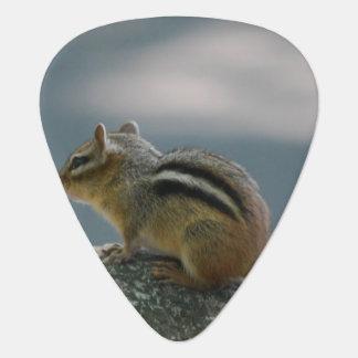 chipmunk-2.jpg pick
