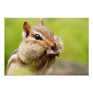 Chipmunk adorable con las mejillas llenas cojinete