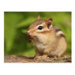 Chipmunk adorable del bebé con bocado tarjetas postales