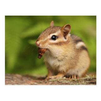 Chipmunk adorable del bebé con bocado postal