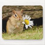 Chipmunk adorable del bebé con la margarita tapete de ratones