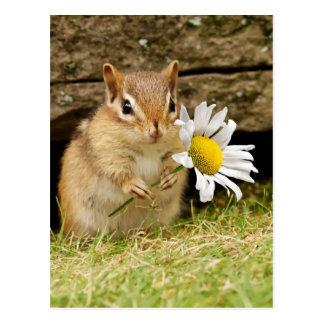 Chipmunk adorable del bebé con la margarita postal