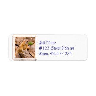 Chipmunk adorable etiqueta de remite