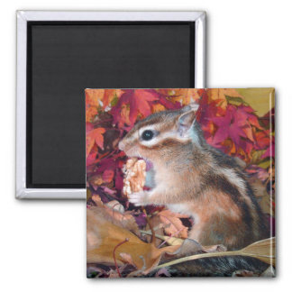 Chipmunk and Autumn (10) photo 2 Inch Square Magnet