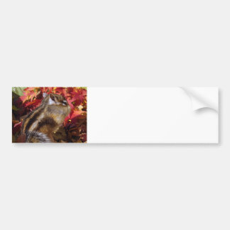 Chipmunk and Autumn (7) photo Bumper Sticker