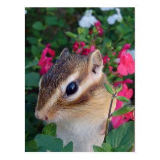 chipmunk and customizable postcard