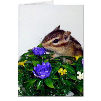 Chipmunk and flower (pohto) type-2 card