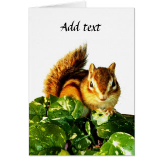 Chipmunk and flower (pohto) type-3 card