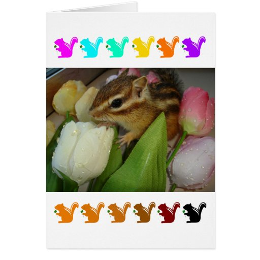 Chipmunk and flower (pohto) type-5 card