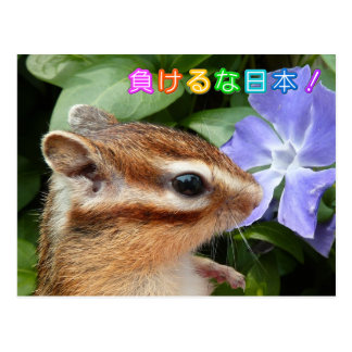 Chipmunk and Support JAPAN Postcard