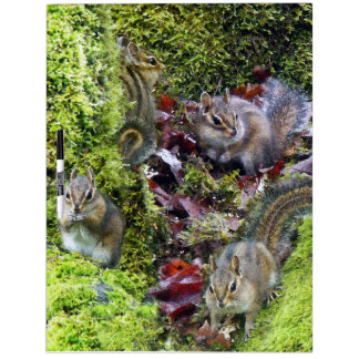 Chipmunk Animals Wildlife Photography Dry-Erase Board