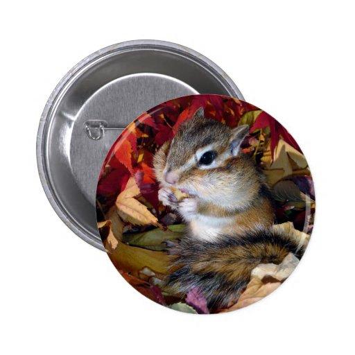 Chipmunk , Autumn (8) photo 缶バッジピンバック